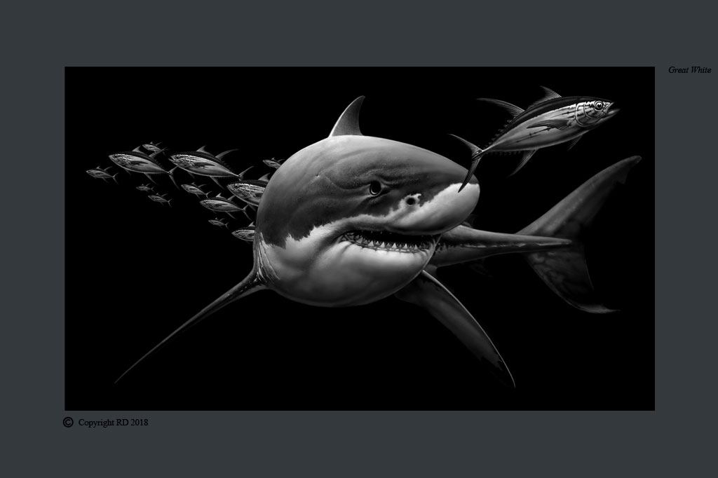Great White Shark - Giclees - Artist - Ray Domingo - Gulfport, FL