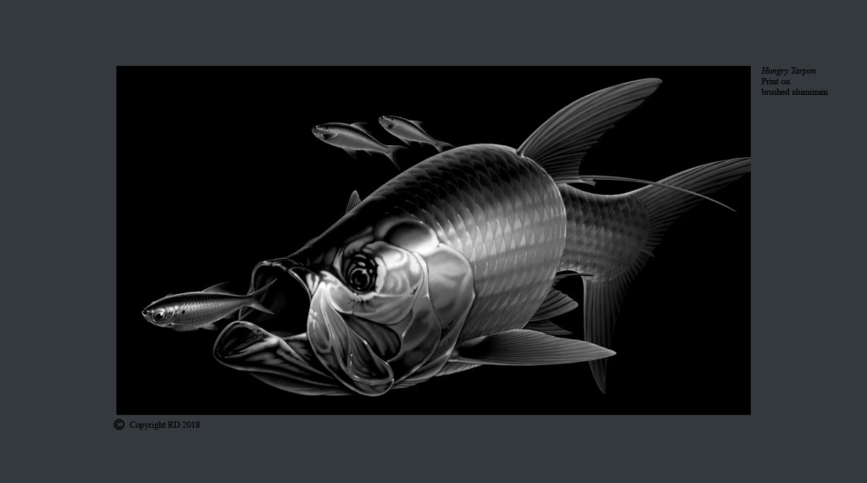 Hungry Tarpon BW - Giclees - Artist - Ray Domingo - Gulfport, FL