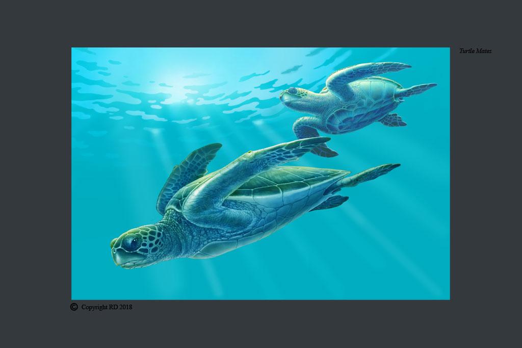 Turtle Mates - Giclees - Artist - Ray Domingo - Gulfport, FL